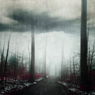 Dirk Wustenhagen ROAD IN STORMY WINTRY COUNTRYSIDE Paths/Tracks
