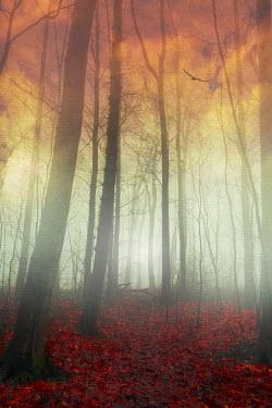 Dirk Wustenhagen FOREST IN AUTUMN AT SUNSET Trees/Forest