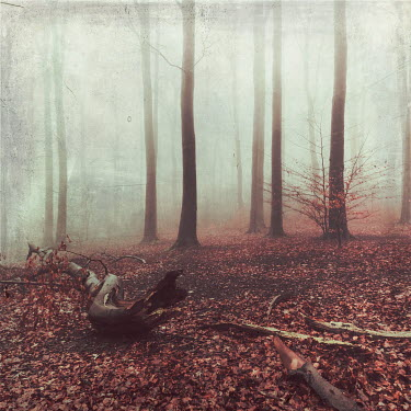 Dirk Wustenhagen LOGS LYING IN MISTY FOREST IN AUTUMN Trees/Forest
