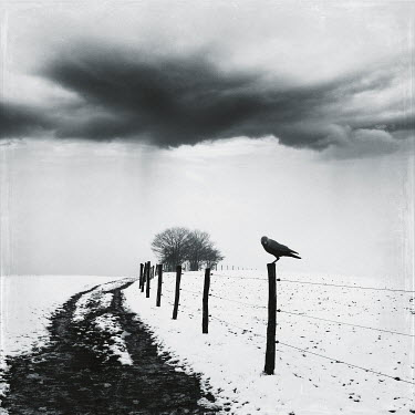 Dirk Wustenhagen BIRD ON FENCE IN SNOWY STORMY LANDSCAPE Fields