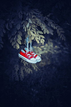 Ildiko Neer Child's sneakers hanging on tree Miscellaneous Objects