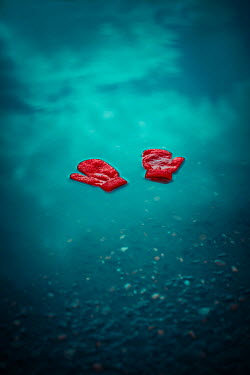 Ildiko Neer Child's red gloves floating in pond Miscellaneous Objects