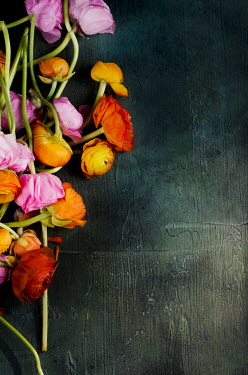 Cristina Mitchell SCATTERED PINK AND ORANGE RED FLOWERS ON TABLE Flowers