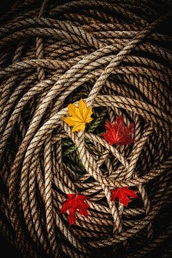 Evelina Kremsdorf ROPE WITH MAPLE LEAVES Miscellaneous Objects