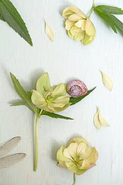 Alison Archinuk SNAIL WITH CUT FLOWERS Flowers