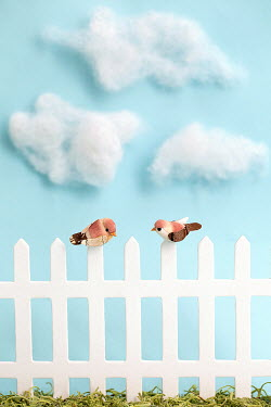 Alison Archinuk Two birds perched on picket fence Miscellaneous Objects
