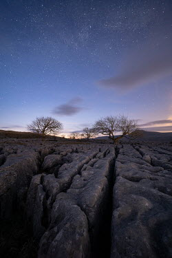 Ollie Taylor Rocky ground and trees at twilight Rocks/Mountains