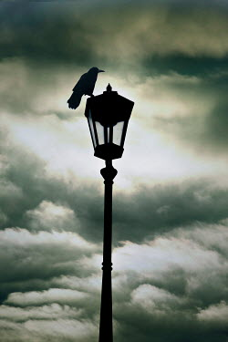 Valentino Sani SILHOUETTED BIRD ON LAMPPOST WITH STORMY SKY Birds
