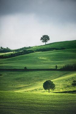 Evelina Kremsdorf TREES ON HILLS IN SUMMER Fields