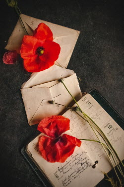 Jane Morley LETTERS AND DIARY WITH RED POPPIES Flowers