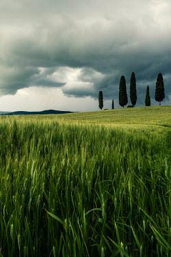 Galya Ivanova CYPRESS TREES IN LANDSCAPE WITH STORMY SKY Fields