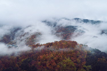 Alex Maxim Autumnal trees on cloudy hill Trees/Forest