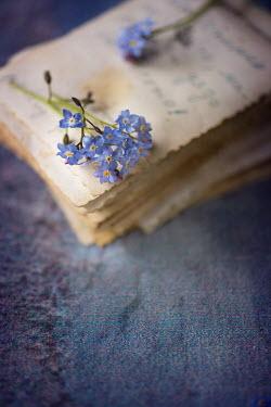 Galya Ivanova BLUE FLOWERS ON PILE OF PAPER Flowers