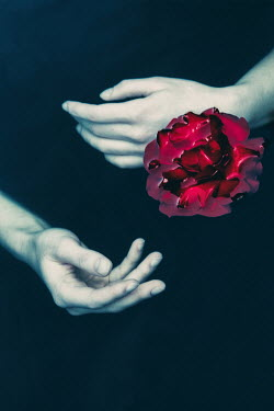 Magdalena Russocka Woman's hands and rose in water Women