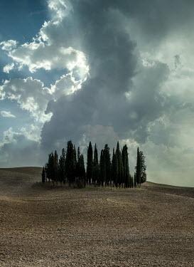 Jaroslaw Blaminsky CYPRESS TREES IN FARM FIELD Fields