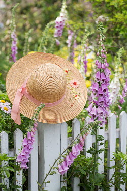 Alison Archinuk STRAW HAT ON WHITE PICKET FENCE Miscellaneous Objects