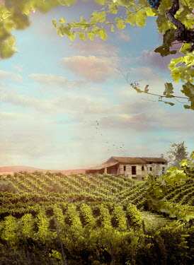 Drunaa FARMHOUSE AND VINEYARD IN SUMMER Houses