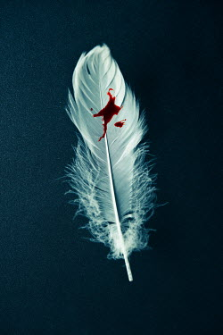 Valentino Sani BLOOD STAINED WHITE FEATHER Miscellaneous Objects