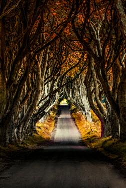 Jaroslaw Blaminsky EMPTY TREE LINED ROAD Paths/Tracks