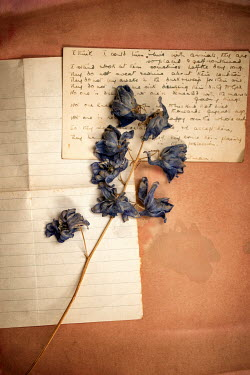 Sally Mundy WITHERED FLOWERS LYING ON LETTER Miscellaneous Objects