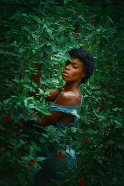 Terrence Drysdale BLACK WOMAN IN BUSH WITH RED FLOWERS Women