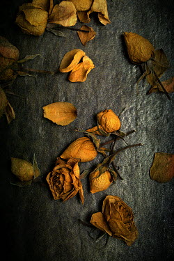 Alison Archinuk dried yellow roses on a green leather surface