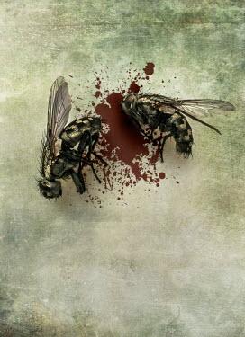 Jaroslaw Blaminsky TWO DEAD FLIES WITH BLOODSTAIN Insects