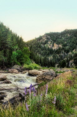 Jill Battaglia Mountain river and wildflowers. Miscellaneous Water
