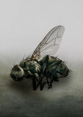 Jaroslaw Blaminsky Dead fly lying on side Animals