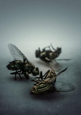 Jaroslaw Blaminsky Three dead flies