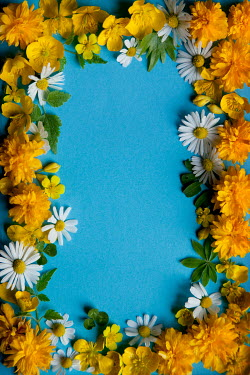 Kerstin Marinov Flower border on blue background