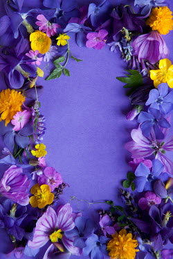 Kerstin Marinov Purple flower border
