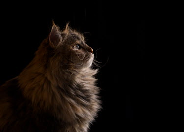 Lisa Holloway CLOSE UP OF CAT IN PROFILE Animals