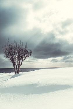 Des Panteva Tree in snow by ocean Seascapes/Beaches