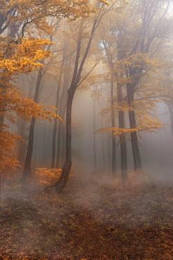 Jaroslaw Blaminsky EMPTY MISTY FOREST IN AUTUMN Trees/Forest