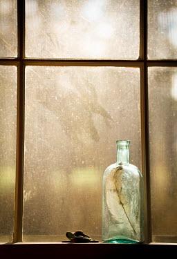 Jean Ladzinski Feather in old bottle by window Flowers