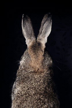 Amy Weiss Rabbit from behind in darkness Animals