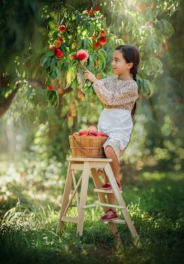 Lilia Alvarado Little girl picking fruit Children