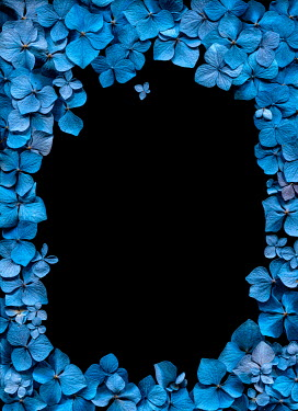 Magdalena Wasiczek border of blue hydrangea flowers Flowers