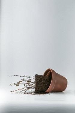 Paolo Martinez Overturned dead pot plant Flowers