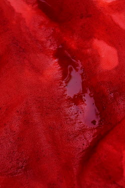 Ute Klaphake BLOODSTAINED CLOTH WITH POOL OF BLOOD Miscellaneous Objects