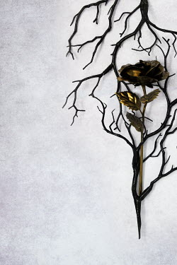 AlcainoCreative Gold rose and black branches