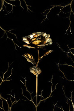AlcainoCreative Gold rose and branches