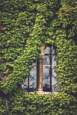Trevor Payne Ivy covering window Building Detail