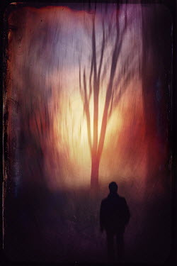 Dirk Wustenhagen SILHOUETTED MAN BY WINTER TREE AT SUNSET Men
