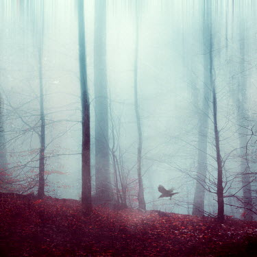 Dirk Wustenhagen BIRD FLYING IN FOGGY AUTUMN FOREST Trees/Forest