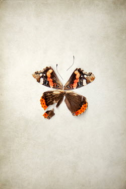 Miguel Sobreira Wings of dissected butterfly
