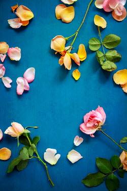 Miguel Sobreira Broken Scattered Roses on Blue Background