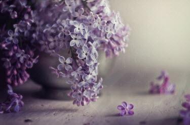 Andreeva Svoboda Lilac in vase Flowers