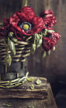 Andreeva Svoboda Poppies in basket